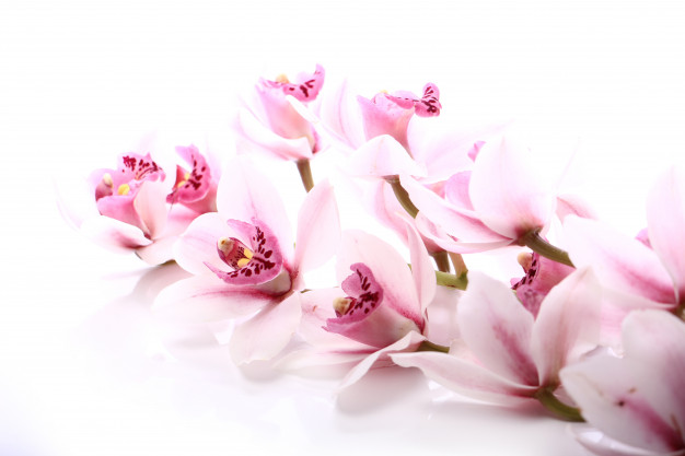 orchid-white-background_144627-11244